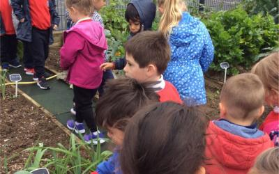 Pupils in the school garden - photo 4