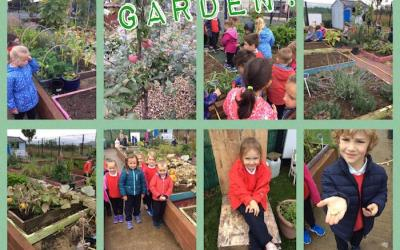 Pupils in the school garden - collage